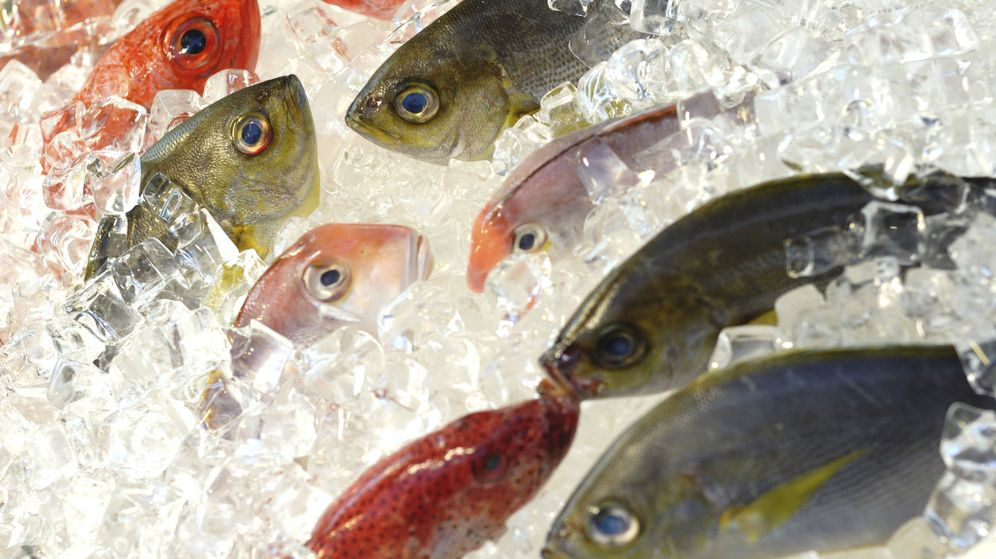 Foto: Peces congelados