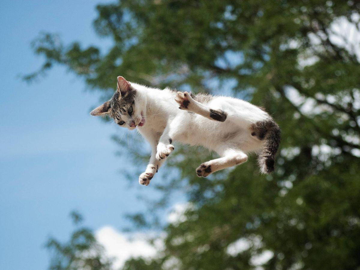 Foto: Un gato cae desde un árbol. (iStock)