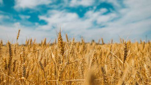 Vídeo   Los sonidos del tiempo de la cosecha
