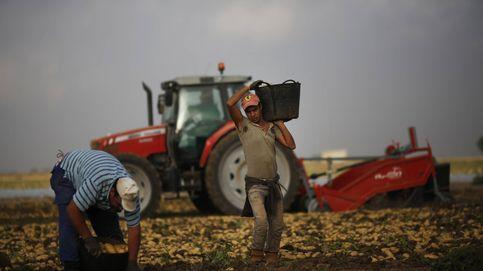 La huerta se consolida como granero de Vox por el 'polvorín' de la inmigración