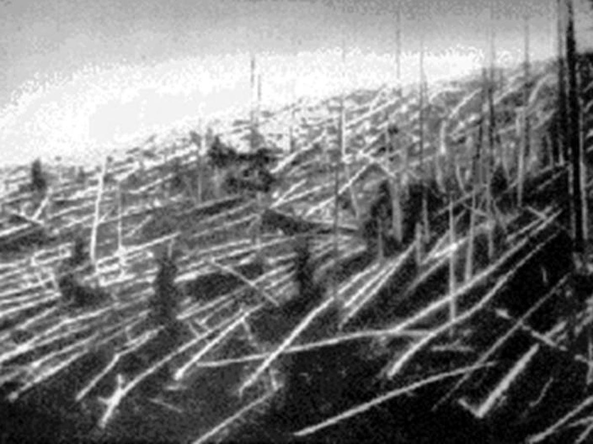 Foto: Árboles calcinados del bosque de Tunguska. (Fotografía de 1927, Wikipedia)