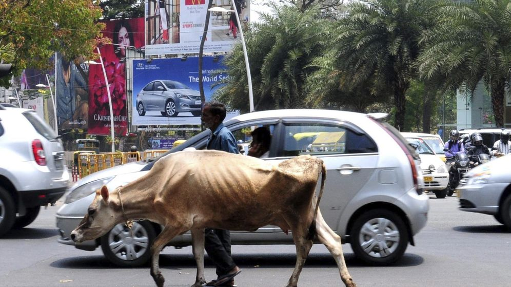 Foto: Un hombre camina con su vaca por una calle de Bangalore (India) en una imagen de archivo. (EFE)