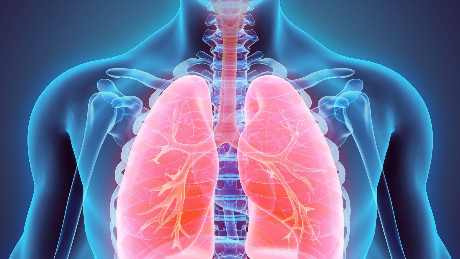 Resultado de imagen de pulmones