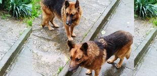 Post de Buscan un hogar en A Coruña para dos perros cuyo dueño se muere de cáncer