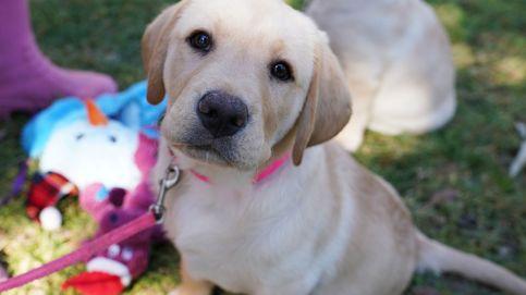 Los ojos de tu perro han evolucionado para comunicarse mejor contigo