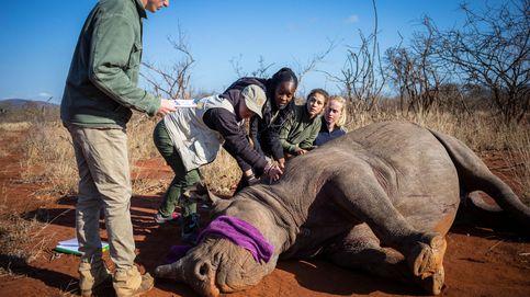 El verano no acaba en Playa Padre y descornado de rinocerontes: el día en fotos