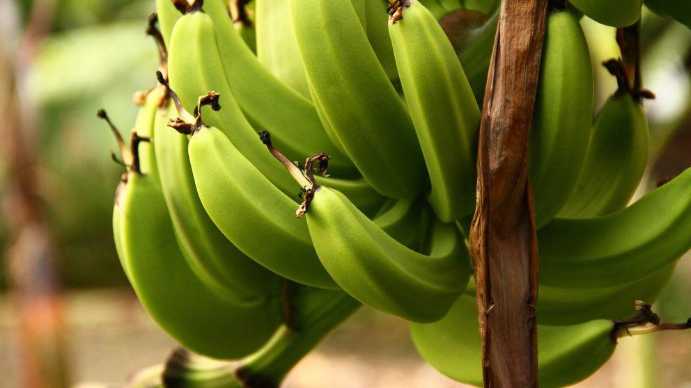 Cinco alimentos que no sabes que adelgazan (y te dejan el vientre plano)
