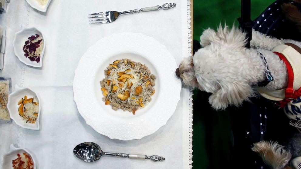 La dieta de moda para mascotas tiene peligro: bacterias y parásitos a tope
