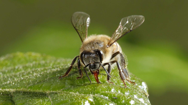 Conservar a los insectos para combatir la crisis climática (EFE)