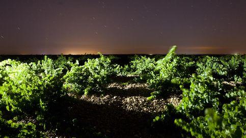 El terruño de Rueda a través de Menade Sauvignon Blanc