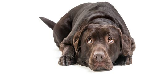 Las cosas que tu perro odia de ti y le encantaría decirte, según los expertos