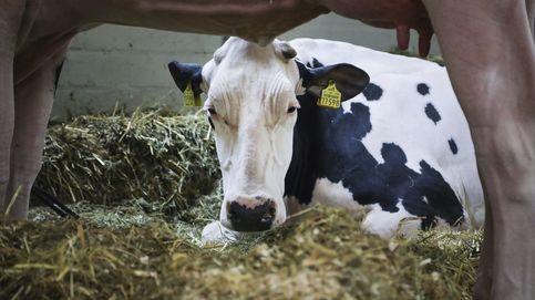 La CNMC multa con 80 M a Danone, Pascual, Puleva o Nestlé por abuso contra ganaderos