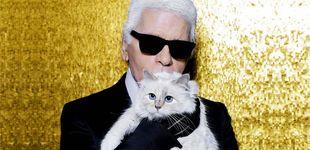 Post de Un año sin Lagerfeld: ¿qué fue de Choupette, la gata heredera de más de 180 millones?