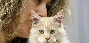 Post de Un estudio revela que tu gato te necesita (aunque creas que no te lo demuestra)