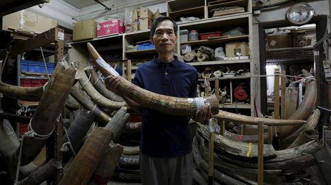 Tras el marfil prohibido en China: la última bala para que los elefantes no se extingan