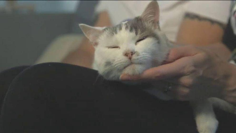 Theo, el gato que salvó la vida a su dueña