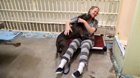 Los presos de Phoenix se reinsertan junto a animales maltratados