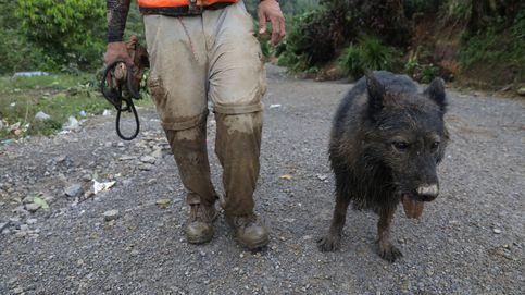 Salvan la vida a un perro que cayó a un pozo de cinco metros en Galicia