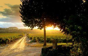Las viñas más exclusivas, veneradas y mimadas de Rioja