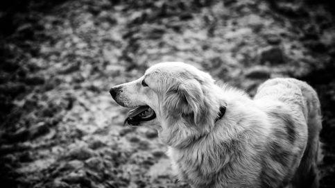 Todas las buenas razones para tener una mascota, según la ciencia