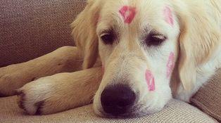 El perro 'instagrammer' de Velencoso