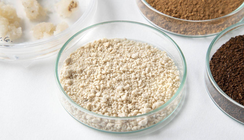 Biomasa de células de café. (VTT)
