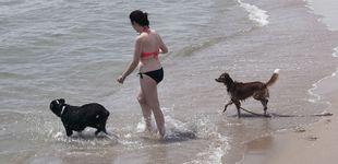 Post de Playas para perros 2019: estos son los sitios donde te podrás bañar con tu mascota