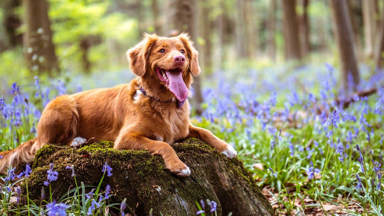 Foto: Evita que el termómetro afecte a tu perro. (Jamie Street para Unsplash)