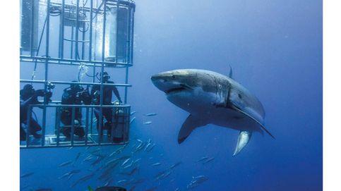 Paisajes submarinos: los seis mejores destinos para bucear por el mundo