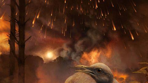 Así sobrevivieron estos pájaros al temible meteorito que acabó con los dinosaurios