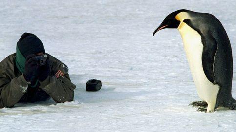 Pingüinos, orcas y focas: así es la mayor reserva marina del mundo