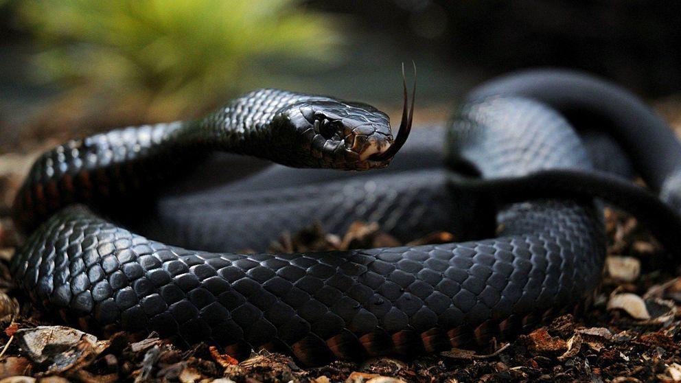 Los animales más venenosos del mundo