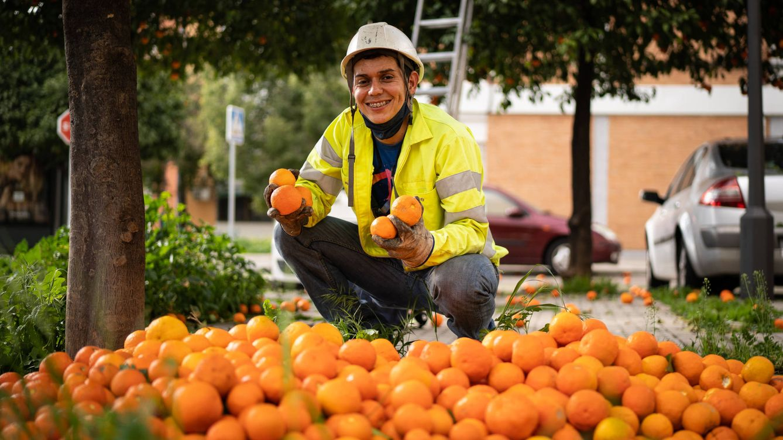 ¿Autobuses movidos con el zumo de las naranjas de Sevilla? El futuro de una sobreproducción de 5,7 millones de kilos