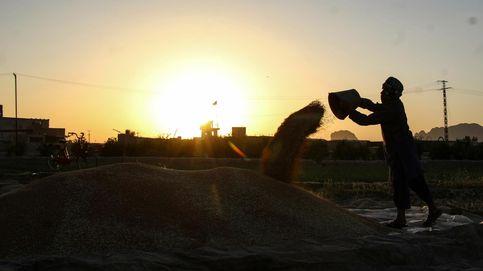 Cosecha del trigo en Kandahar y explosión del volcán de Fuego: el día en fotos