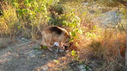 Un pastor alemán llora la muerte de su mejor amigo, un chihuahua atropellado