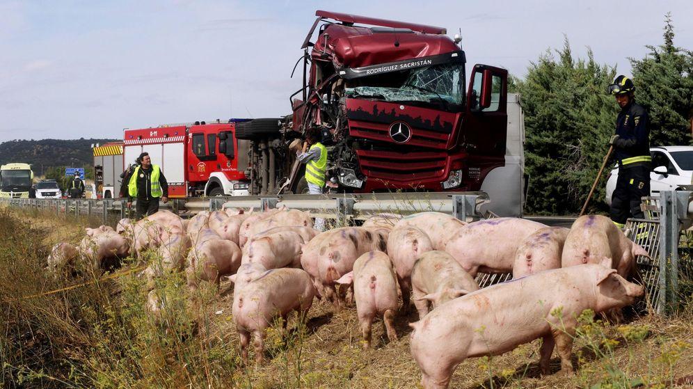Foto: Vista del accidente ocurrido este lunes donde un camión cargado de cerdos ha colisionado con un autobús con siete pasajeros en Palencia. (Efe)
