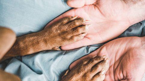 Por qué las patas de tu perro huelen a fritos