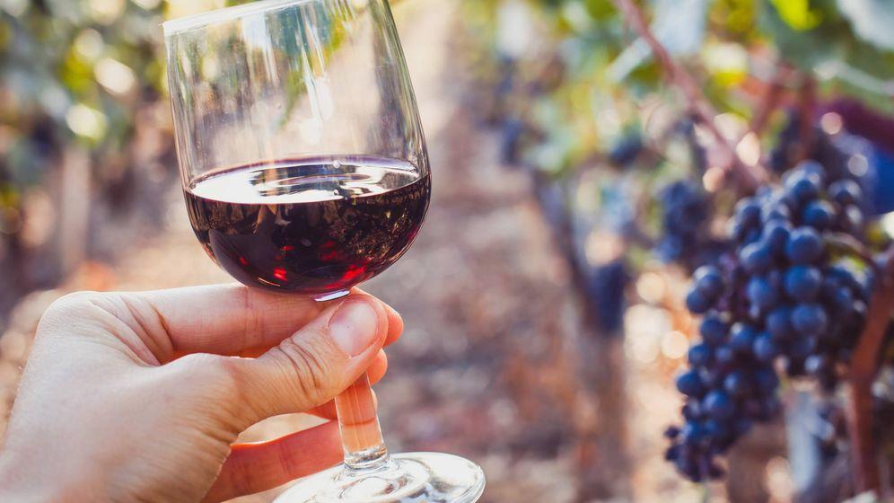 Foto: Cata de vino. (iStock)