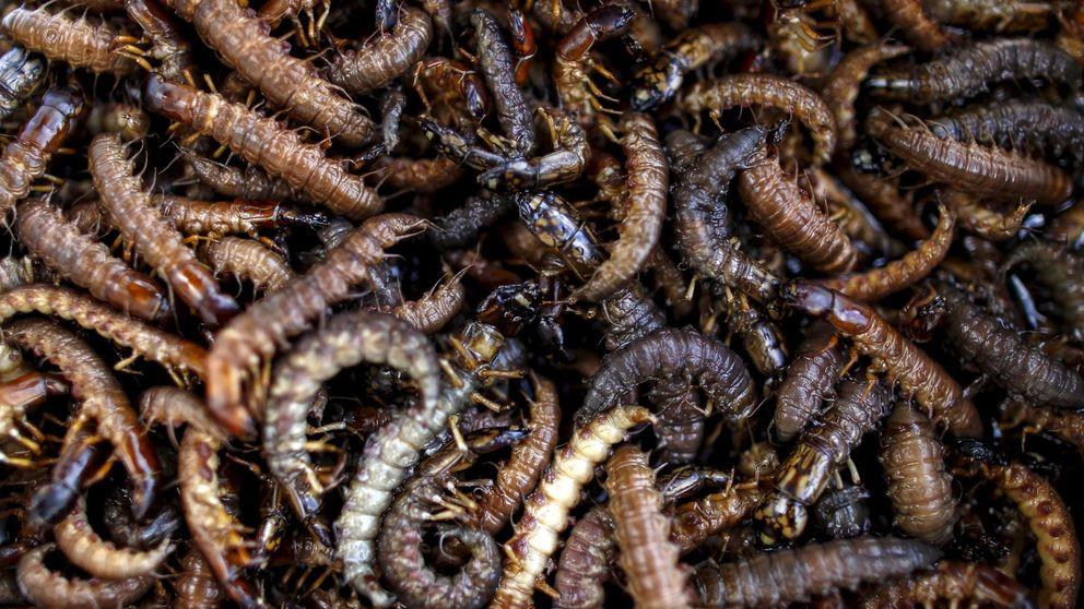 'Efecto lujo': en las casas de los ricos viven más especies de insectos