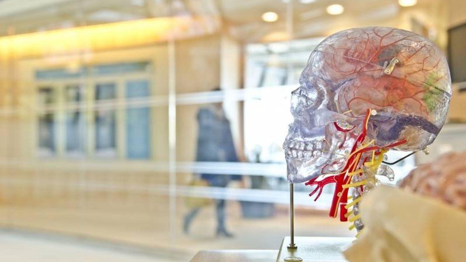 Foto: El cerebro está diseñado para adaptarse a los cambios externos (Fuente: Jesse Orrico| Unsplash.com)