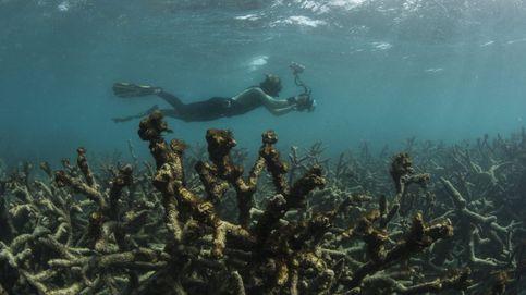 La Gran Barrera de Coral, en situación crítica por el cambio climático