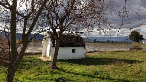 El Delta del Ebro se hunde ante el desdén de los políticos