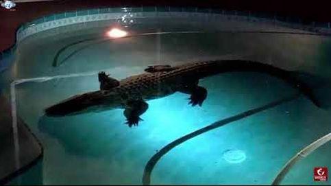 Una familia de Florida encuentra un caimán en la piscina de su casa