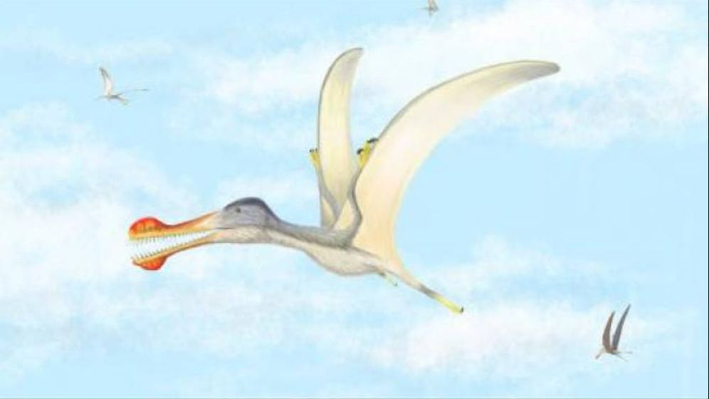 Foto: Representación gráfica de un pterosaurio. Foto: Universidad de Baylor