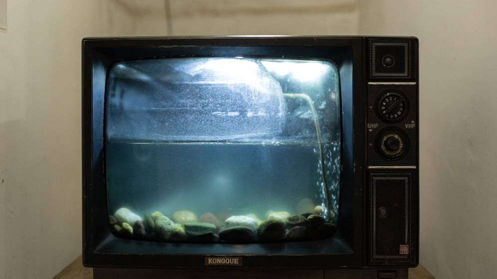 Foto: Una antigua televisión, convertida en acuario. (Foto: Unsplasj)