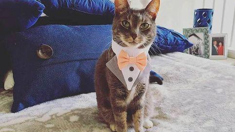 Un gato ejerce como padrino de boda y enamora a las redes sociales