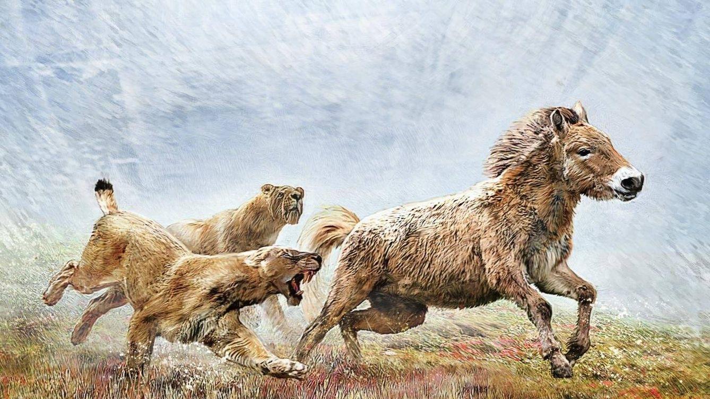 Esta es la original estrategia que usaban los extintos tigres dientes de sable para cazar