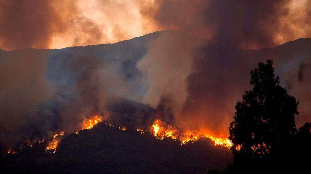 Foto: Incendio en Estepona, Málaga. (EFE)