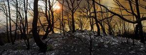 Trece CCAA en alerta por riesgo de incendios