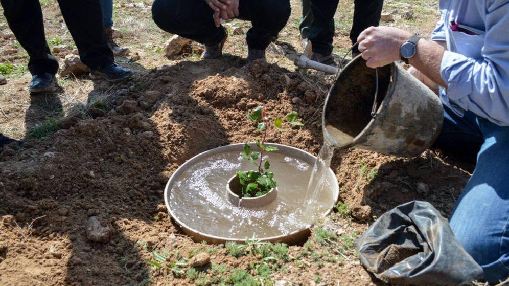 Foto: El 'cocoon', el donut que con solo 25 litros de agua es capaz de dar vida a un árbol. (Foto: Twitter)